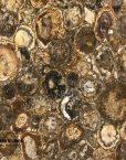 Australian-Petrified-Wood-Stone-round-1