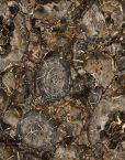 Black-big-round-petrified-wood-stone